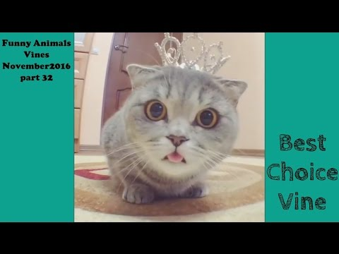 Funny Animals Vines November 2016 part 32 | BestChoiceVine